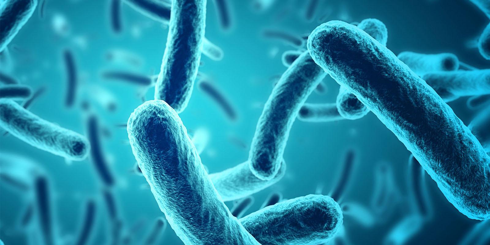 Antibiotic resistant E.coli bacteria